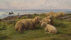 265. Como ovelhas sem pastor