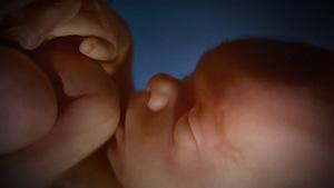 36. Legalização do aborto no Brasil