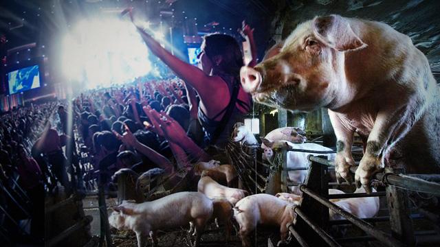 Rock in Rio e o orgulho dos porcos