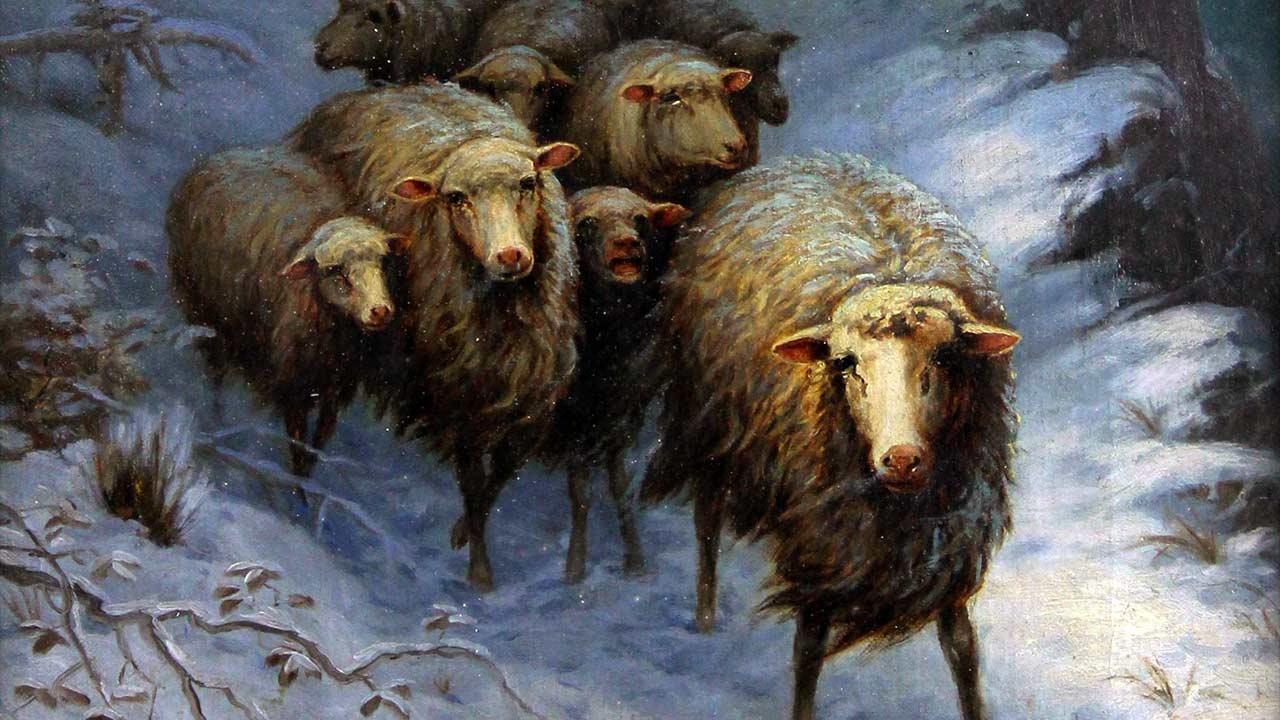"""""""Como ovelhas sem pastor"""""""