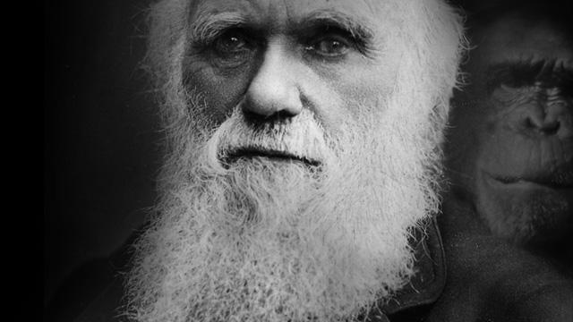 Pode um católico defender a Teoria da Evolução?