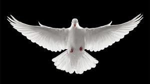 86. A Docilidade ao Espírito Santo